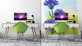 25c43b481d078f Fototapeta Kwiaty niebieski chaber (Centaurea cyanus). Ilustracji ...