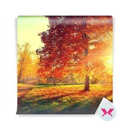 Fototapeta - Las jesienią
