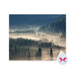 Sticker - Fir trees on a meadow down the will to coniferous forest in foggy mountains