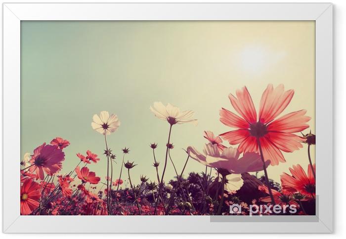 Poster in Cornice Vintage paesaggio natura sfondo di belle cosmo campo di fiori sul cielo con la luce del sole. effetto filtro toni retrò colore - Piante & Fiori