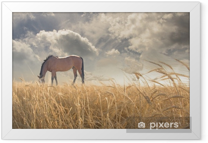 Horse grazing in field Framed Poster - Animals