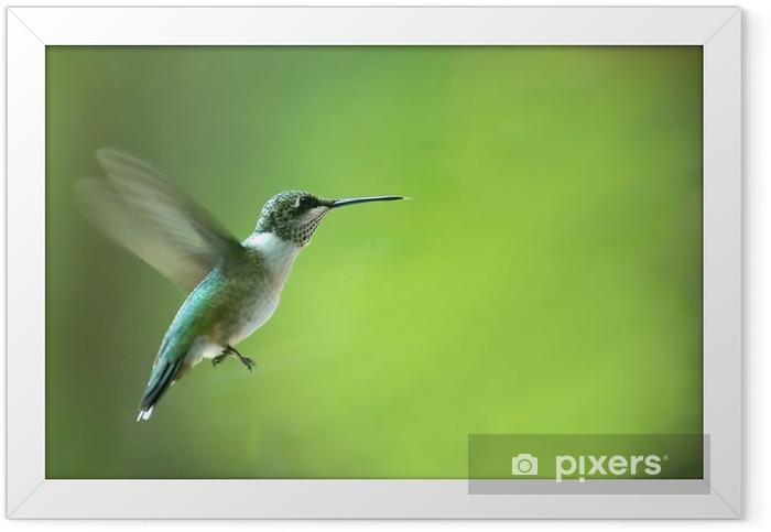 hummingbird Framed Poster - Birds