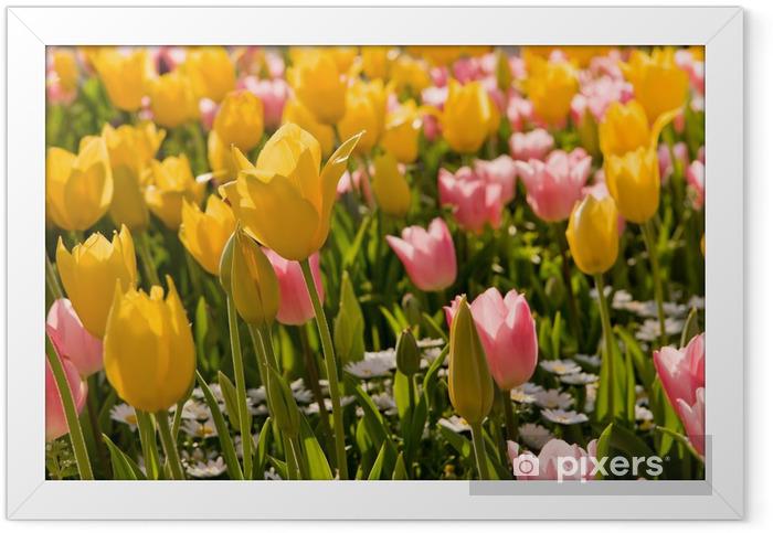 Plakat w ramie Tulipan - Tematy