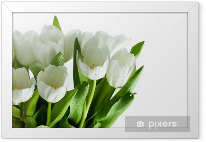 Plakat w ramie Białe tulipany - Kwiaty