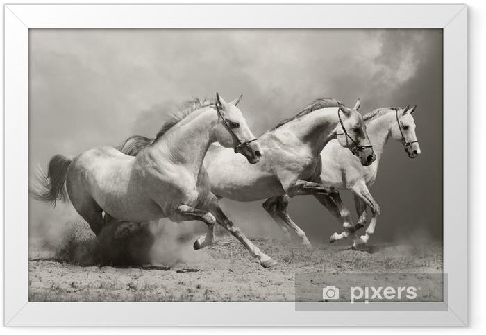 white horses in dust Framed Poster -