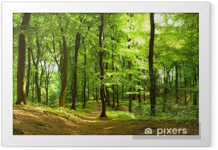 Waldweg im Sommer Framed Poster - Destinations