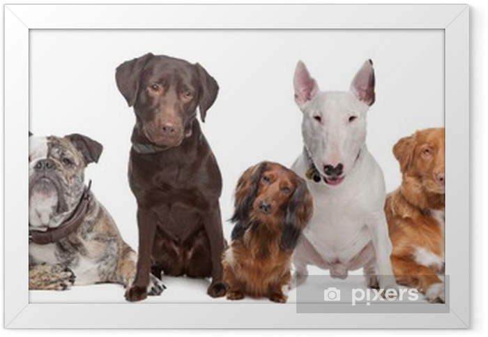 Group of Dogs Framed Poster - Wall decals