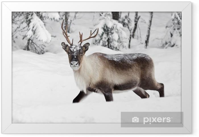 reindeer Framed Poster - Themes