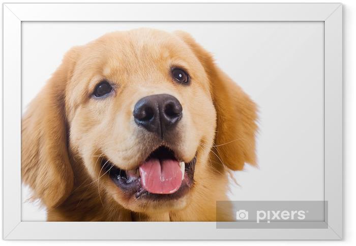 Happy golden retriever dog Framed Poster - Happiness