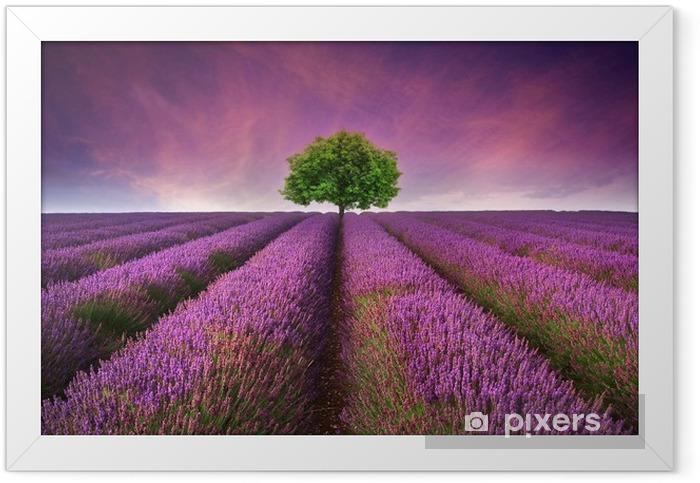 Stunning lavender field landscape Summer sunset with single tree Framed Poster -