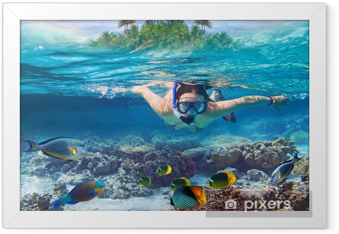 Young women at snorkeling in the tropical water Framed Poster - Water Sports
