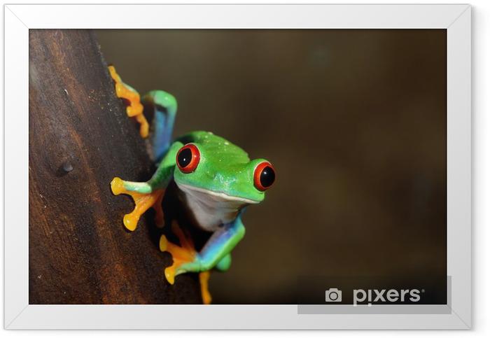 red-eye frog Agalychnis callidryas in terrarium Framed Poster - Other Other