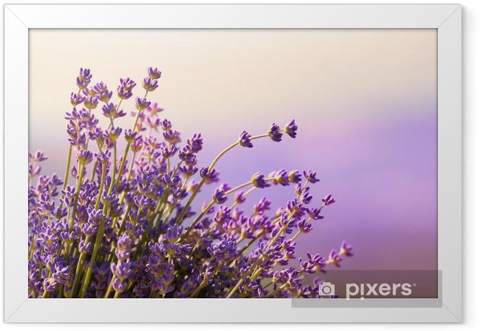 Lavender flowers bloom summer time Framed Poster - Herbs