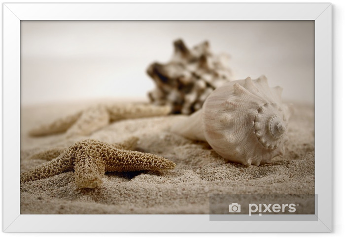 seashells on the sand Framed Poster - iStaging