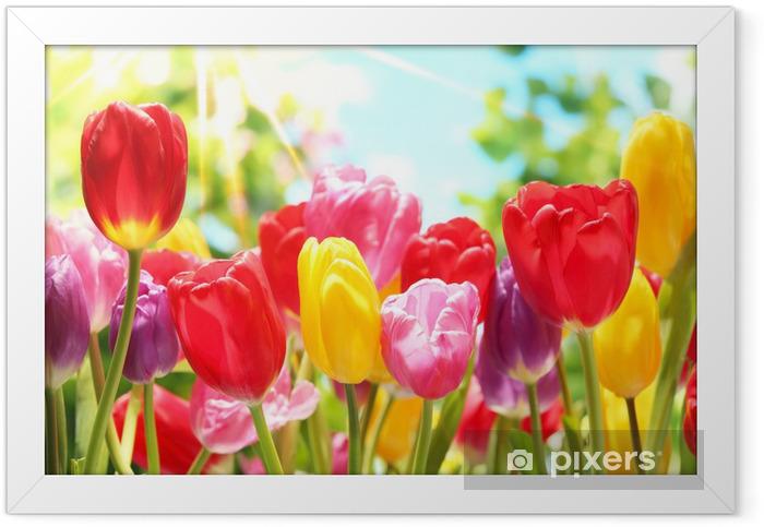 Poster en cadre Tulipes fraîches dans la chaleur du soleil - Thèmes
