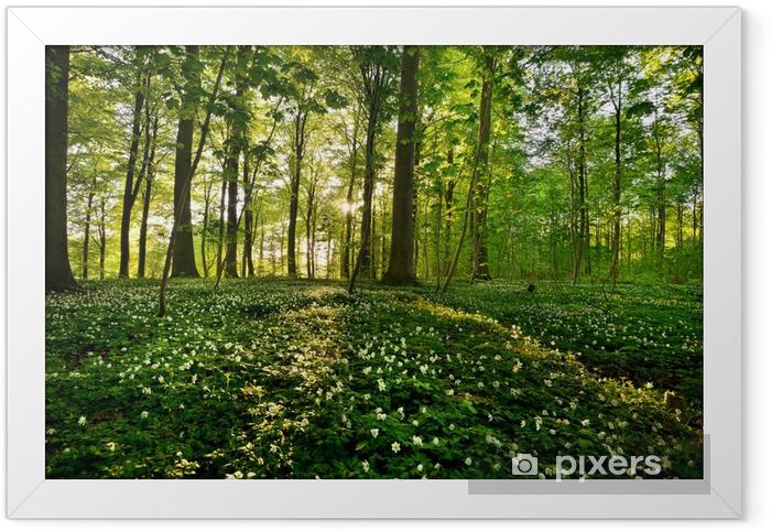 Plakat w ramie Leśne zawilce - Tematy