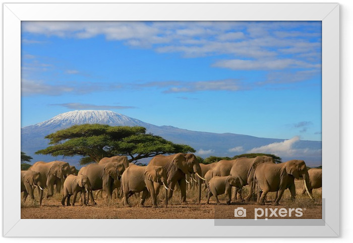 Kilimanjaro With Elephant Herd Framed Poster - Themes