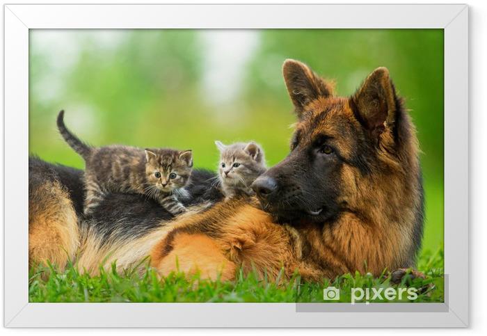 Plakat w ramie Owczarek niemiecki z dwóch małych kociąt - Tematy