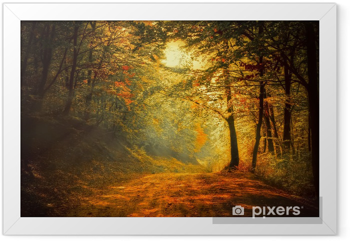 Autumn in the forest Framed Poster - Themes