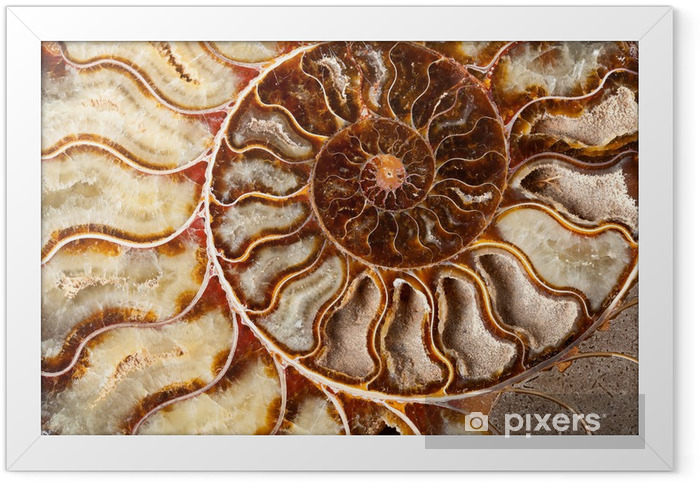 Beautiful ammonite mineral Framed Poster - Textures