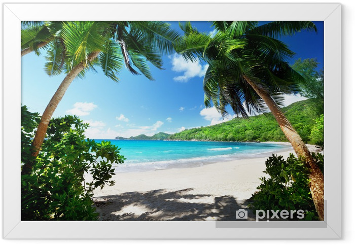 beach, Mahe island, Seychelles Framed Poster - Palm trees