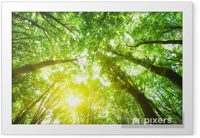 forest trees Framed Poster - Destinations