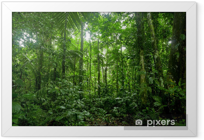 Tropical Rainforest Landscape, Amazon Framed Poster - Themes