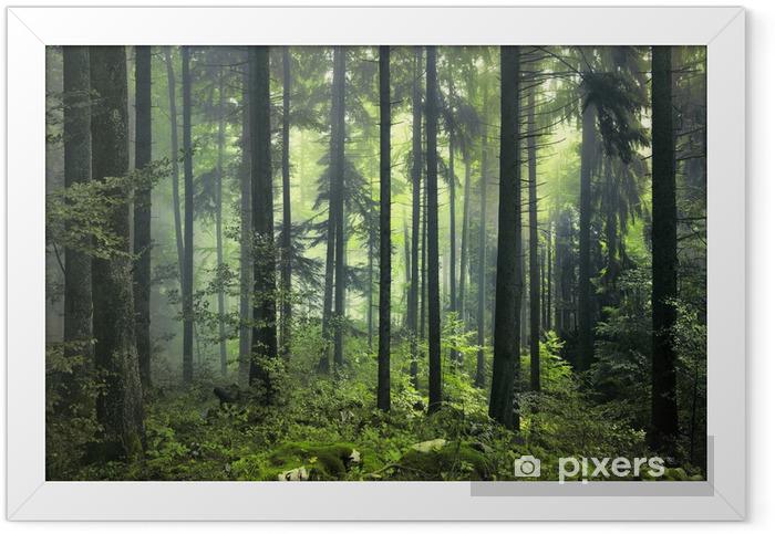 Mysterious dark forest Framed Poster - Styles