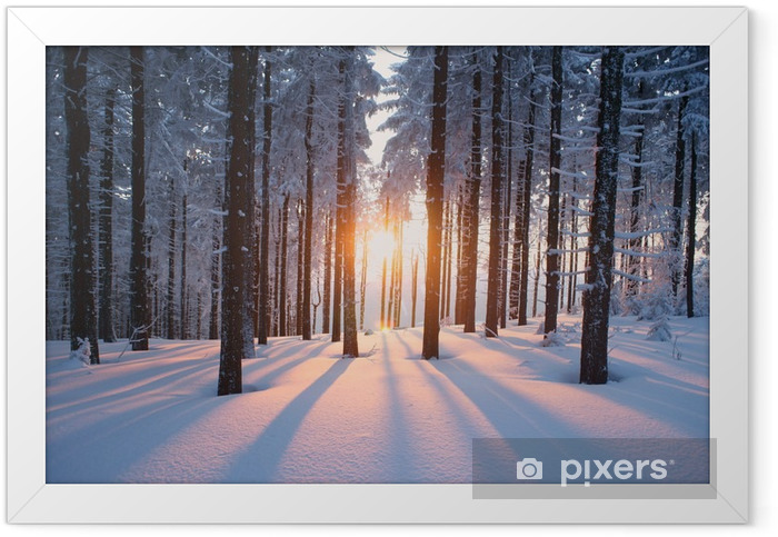 Sunset in the woods in winter Framed Poster -
