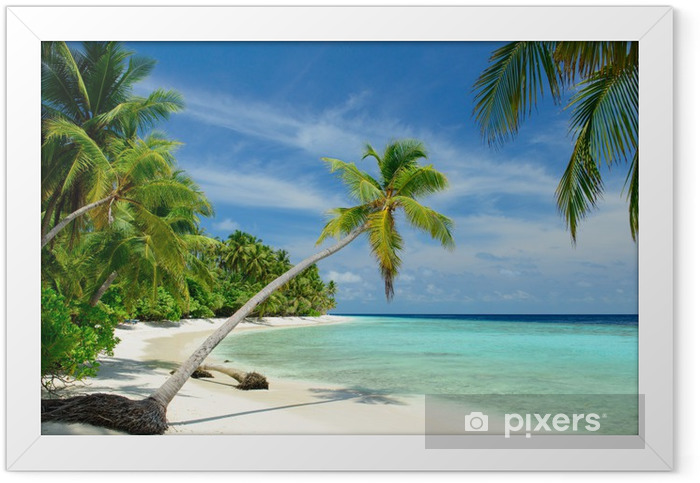 Plakat w ramie Samotna plaża z palmami - Morze i ocean