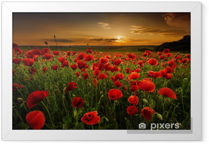 Poppy field at sunset Framed Poster - Themes