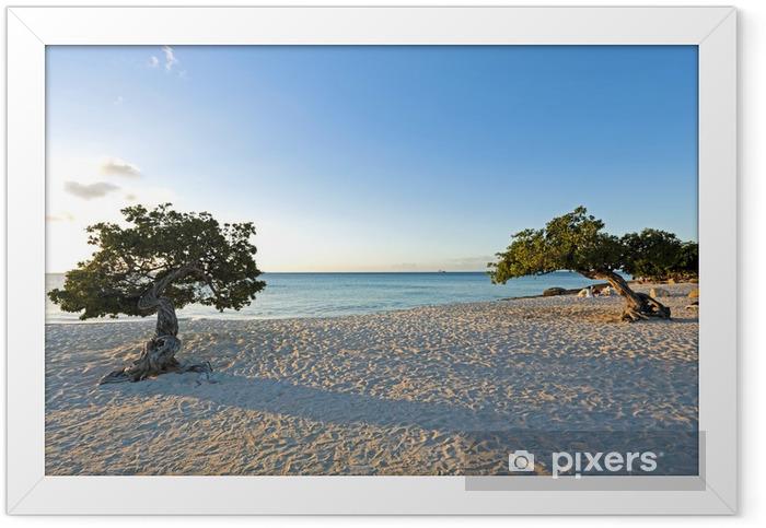 Divi divi trees on Aruba island at sunset Framed Poster - America