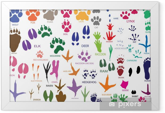 Poster en cadre Empreintes de pattes de vecteur animaux et les oiseaux - Mammifères