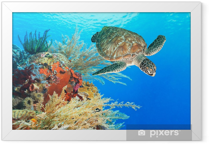 Turtle and coral Framed Poster - Destinations