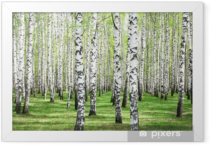 First spring greens in birch grove Framed Poster - Styles