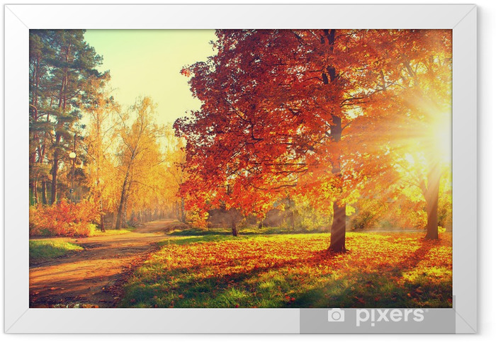 Trees in the autumn sun light Framed Poster - Themes