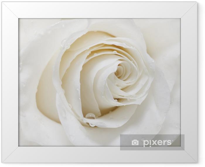 white rose Framed Poster - iStaging