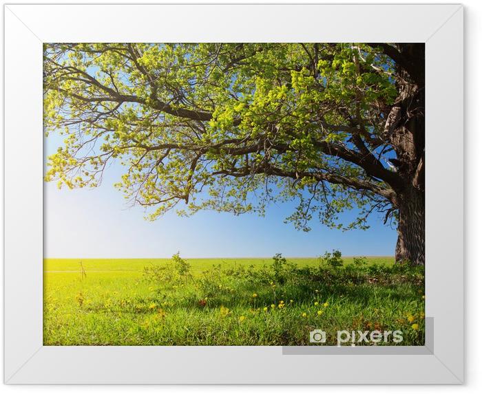 Majestic tree Framed Poster - Destinations