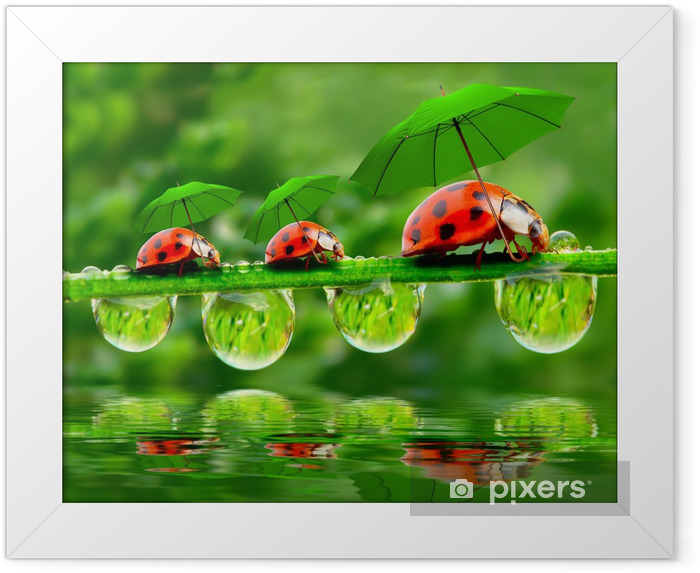 Little ladybugs with umbrella. Framed Poster - Other Other