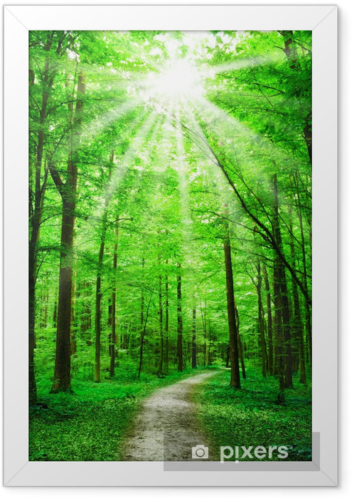 nature. path in forest with sunshine Framed Poster - Themes