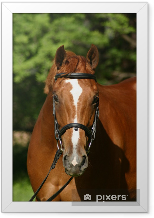 Poster en cadre Tete cheval - Sports individuels