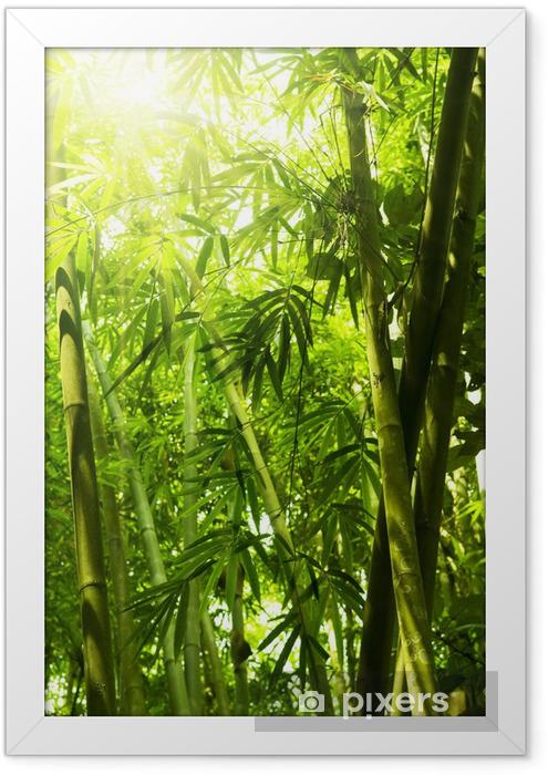 Plakat w ramie Bambusowy las - Tematy