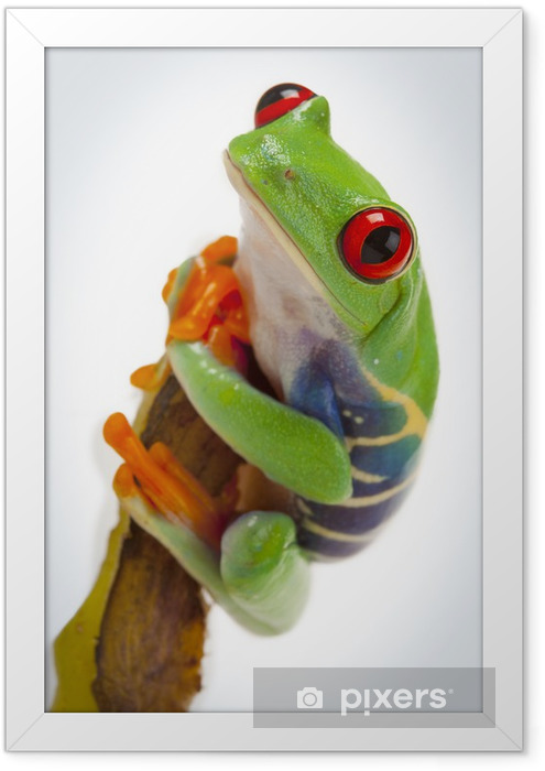 Banana Frog Framed Poster - Other Other