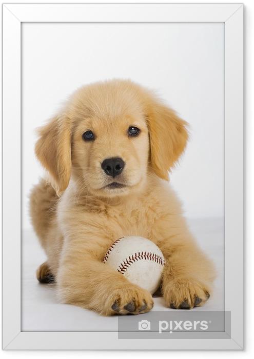 Poster en cadre Chiot Golden Retriever avec une balle de baseball - Matchs et compétition