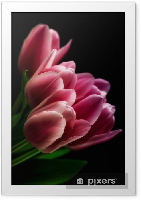 Plakat w ramie Różowe tulipany na czarnym tle - Tematy