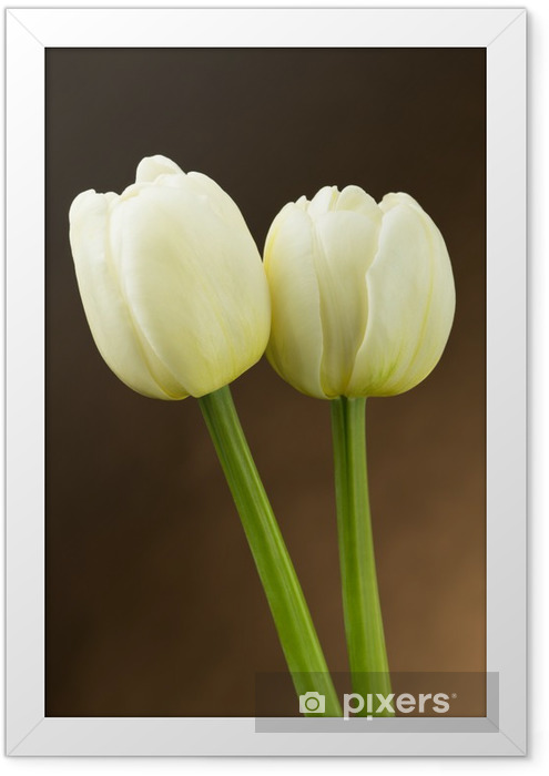 Białe tulipany Framed Poster - Themes