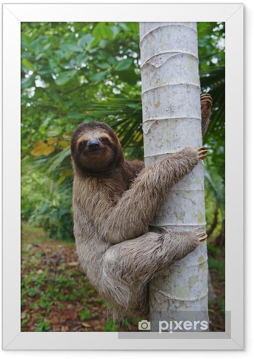 A three-toed sloth climbing on a tree Framed Poster - Mammals