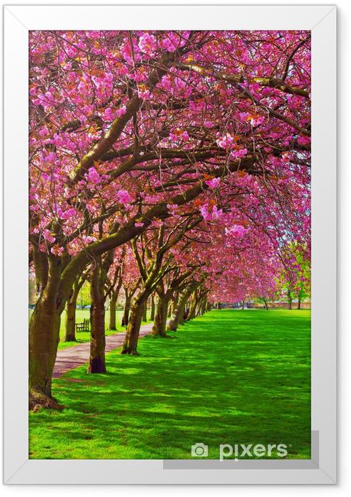 Plakat w ramie Ścieżka spacer w otoczeniu kwitnących śliw - Tematy