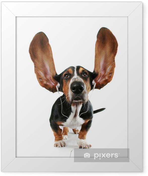 basset hound listening to music Framed Poster - Mammals