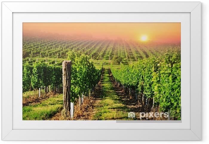 Ingelijste Poster Groene wijngaard in Zuid-Moravië bij zonsopgang - iStaging